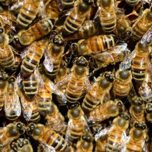 honey-292132_1920
